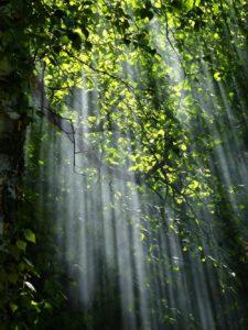 La lumière du soleil à travers les arbres
